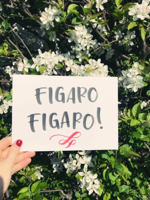 hand holding sheet of paper that says figaro figaro! green flower backdrop